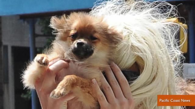 News video: Amanda Bynes Uses Dog As Paparazzi Shield